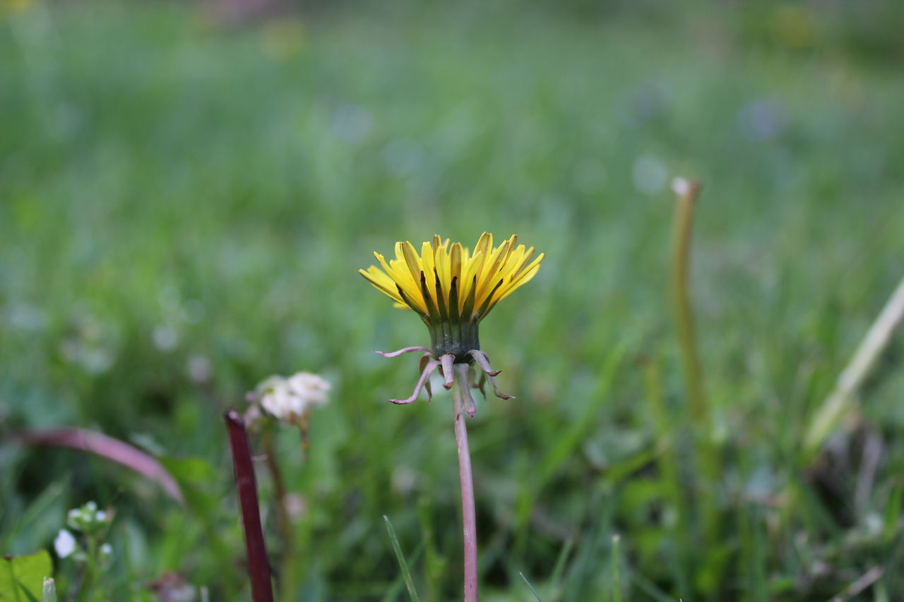 Yellow. Botany Close-up Flower Flower Head Focus On Foreground Freshness Nature No People Plant Yellow
