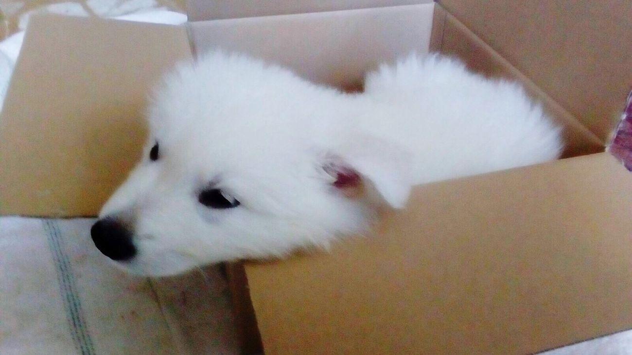 Babydog Pet Cutie Little White Fluffy Baby Dog Littledog Beauty Sweet Love