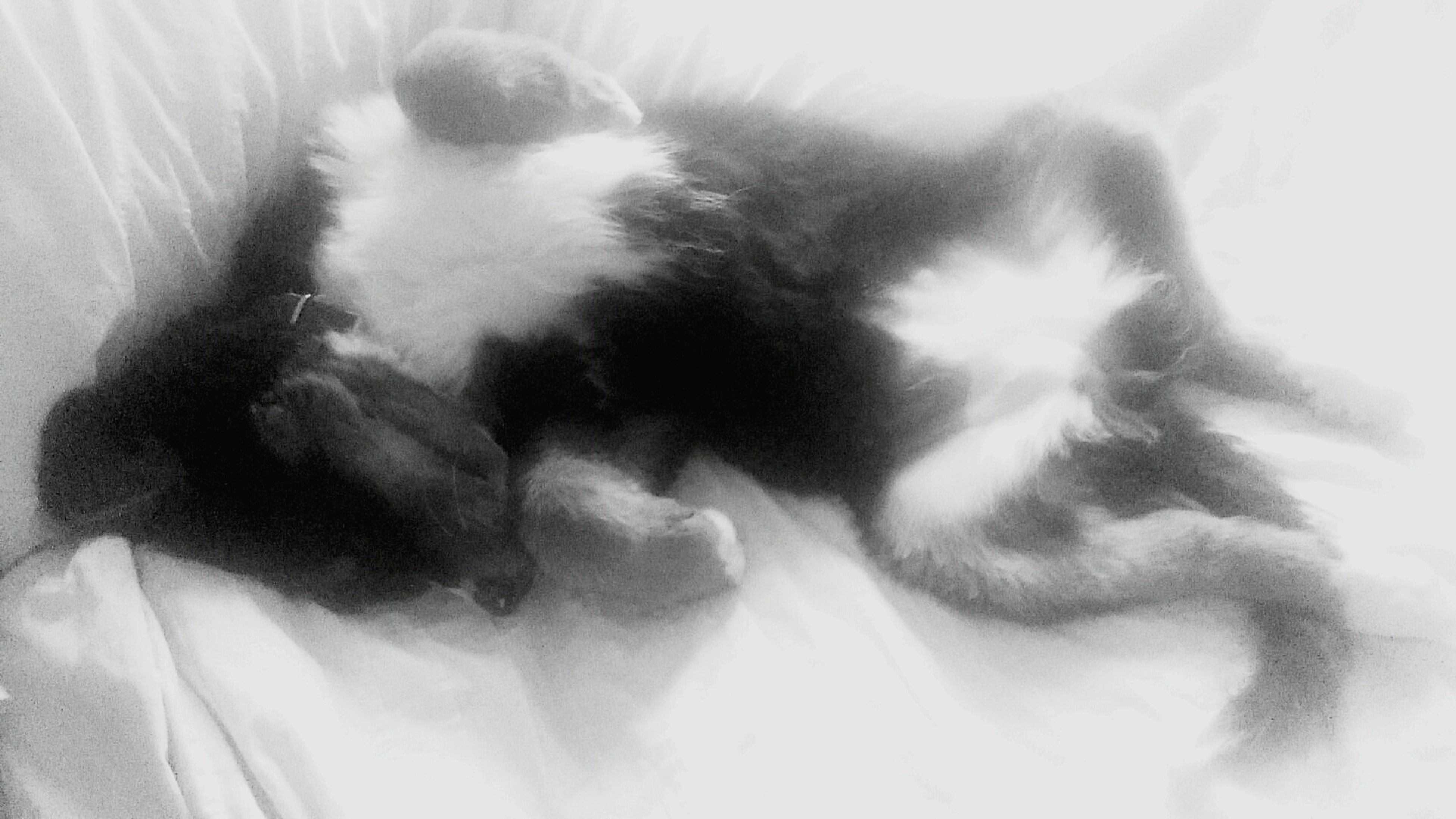 pets, domestic animals, animal themes, domestic cat, indoors, mammal, one animal, cat, feline, relaxation, sleeping, bed, resting, lying down, home interior, whisker, close-up, eyes closed, two animals, home