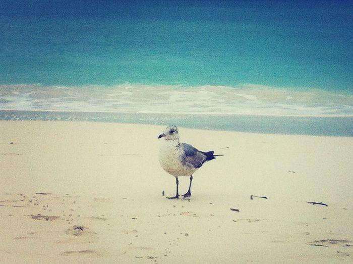 Good Morning-Let's go to the Beach!!! Beach Life Is A Beach Nature Enjoying Life