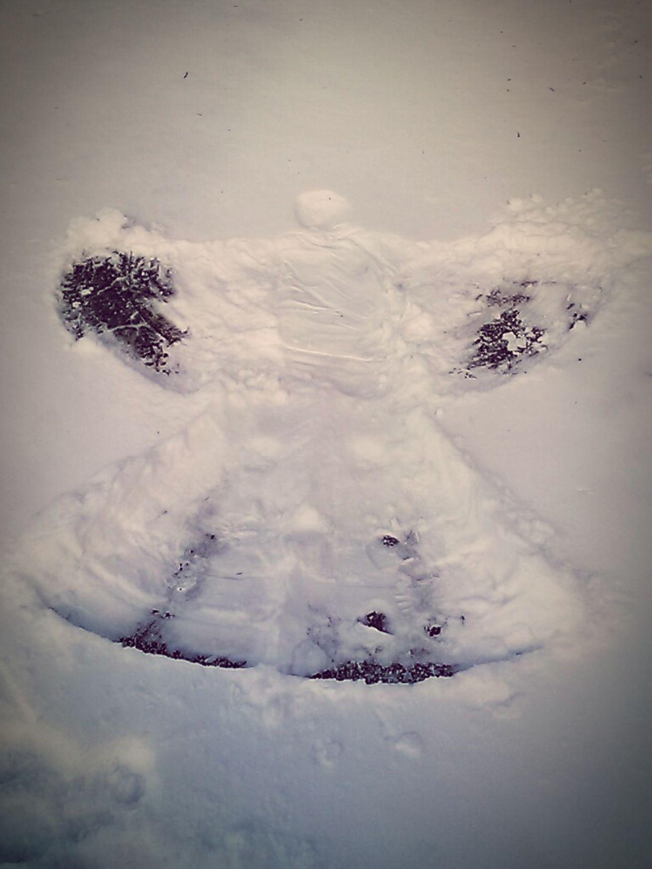 Winter / Ice storm of 2015 First Eyeem Photo