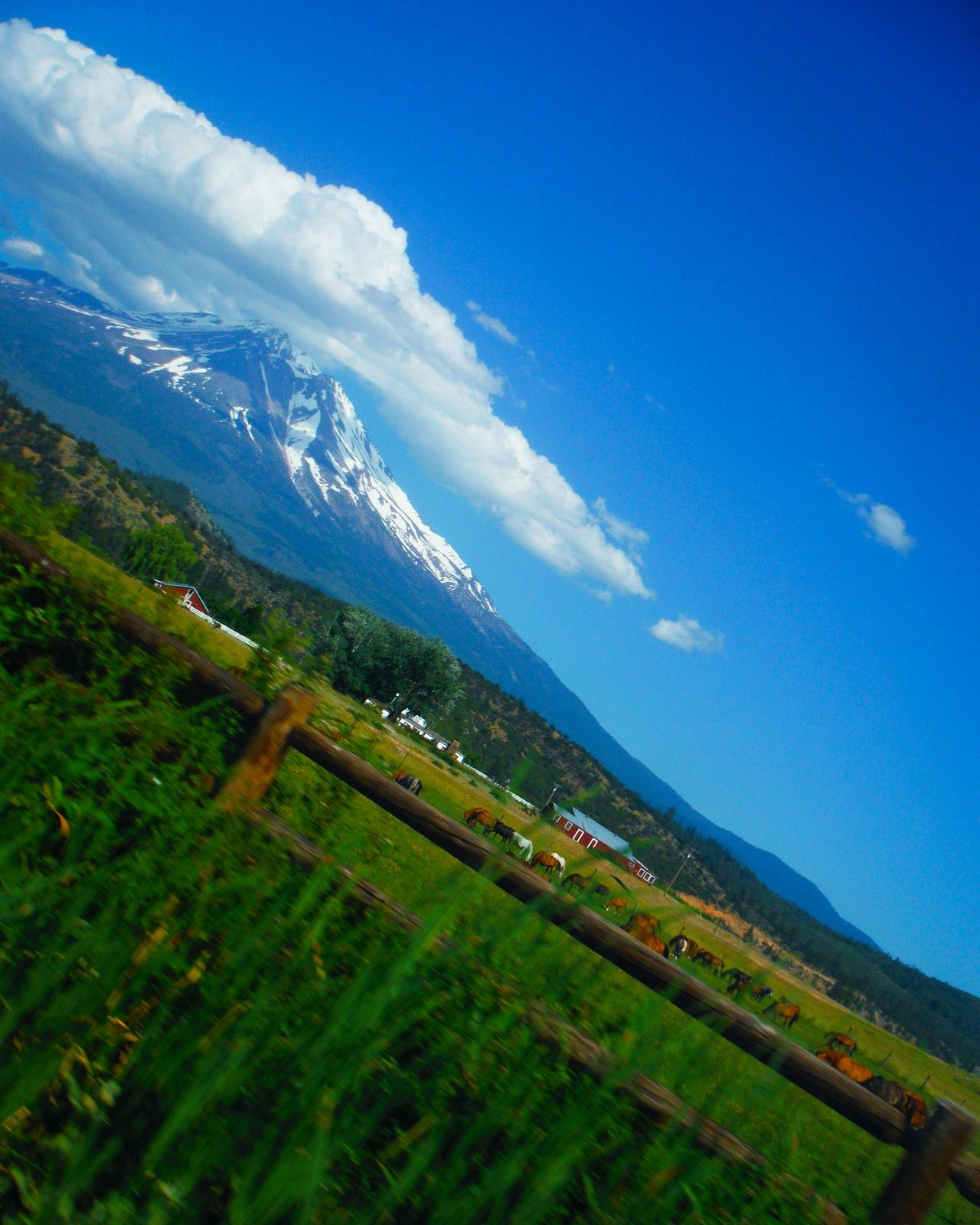 Who says landscapes have to be horizontal? Tilted Different Perspective Mt. Shasta Pasture Pasture Fence Cattle Mountain And Sky Mountain And Clouds Cloud Porn Cloud Plume Green And Blue Countryside In The Country Farm Life Sunny Day Mt Shasta Mount Shasta Mount Shasta, California Mount Shasta, CA Eyeem California Perspective Photography Different View Different Angle Slanted Diagonal Perspective