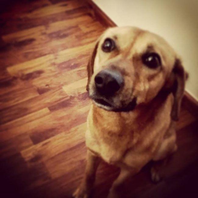 Will. My Best Friend Amici Friend Dogs świt Housedog Honey Fedelta Amicizie Ilikeit