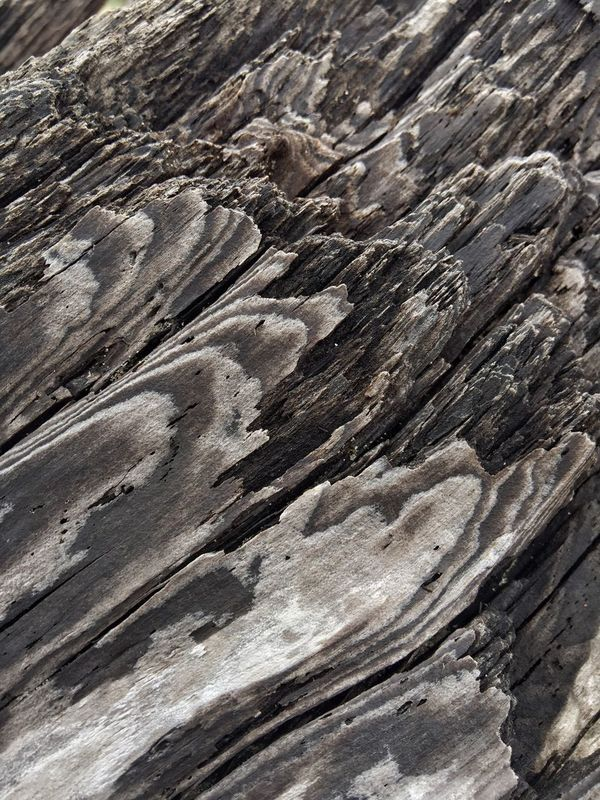 Layers And Textures Close-up Driftwood Nature Textured  Backgrounds Outdoors Pattern Abstractions In Nature Beauty In Nature Shapes In Nature  Abstract Nature Tree Washed Up Shore Oregon Coast