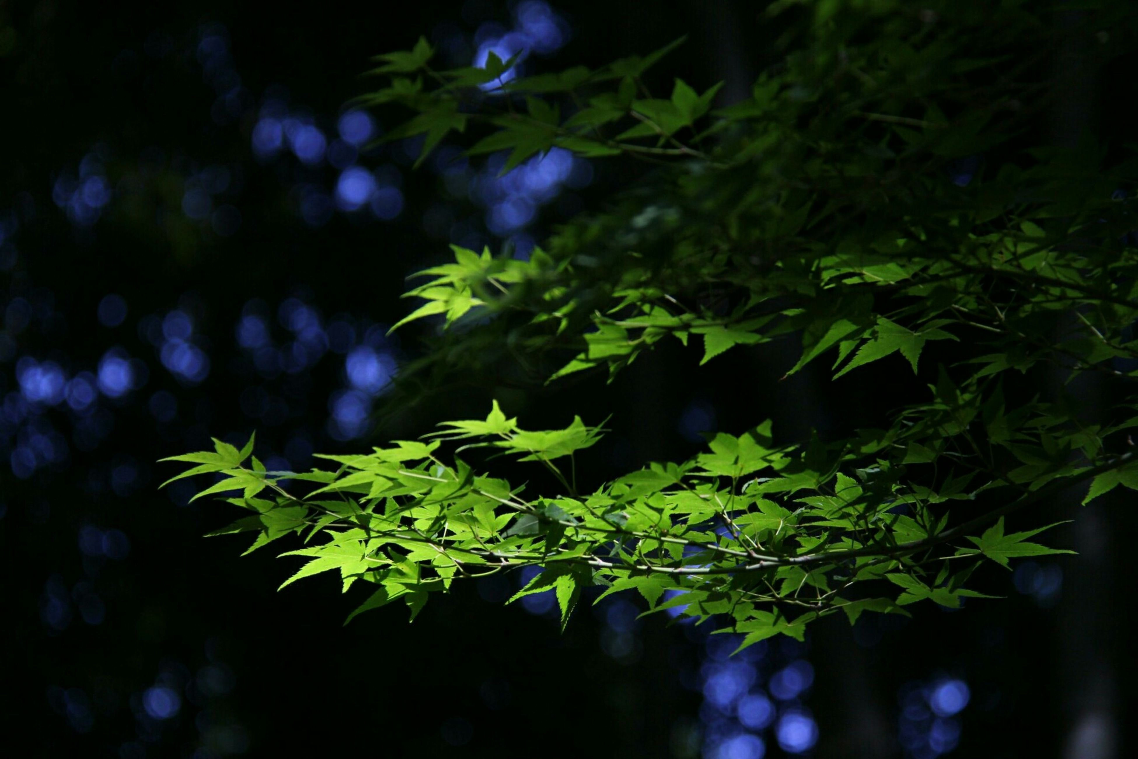 leaf, growth, close-up, green color, tree, plant, selective focus, nature, branch, focus on foreground, fragility, beauty in nature, green, freshness, day, scenics, dark, outdoors, tranquility, botany, no people, plant life, lush foliage