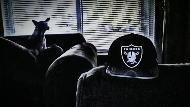 WeDo Looking Out The Window Raiders Hat Oakland Raiders Raider Nation Backlight Backlighting Shadows & Lights Shadow-art Light And Shadow