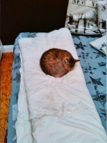 Zaza, ma petite crotte ? Cats Relaxing