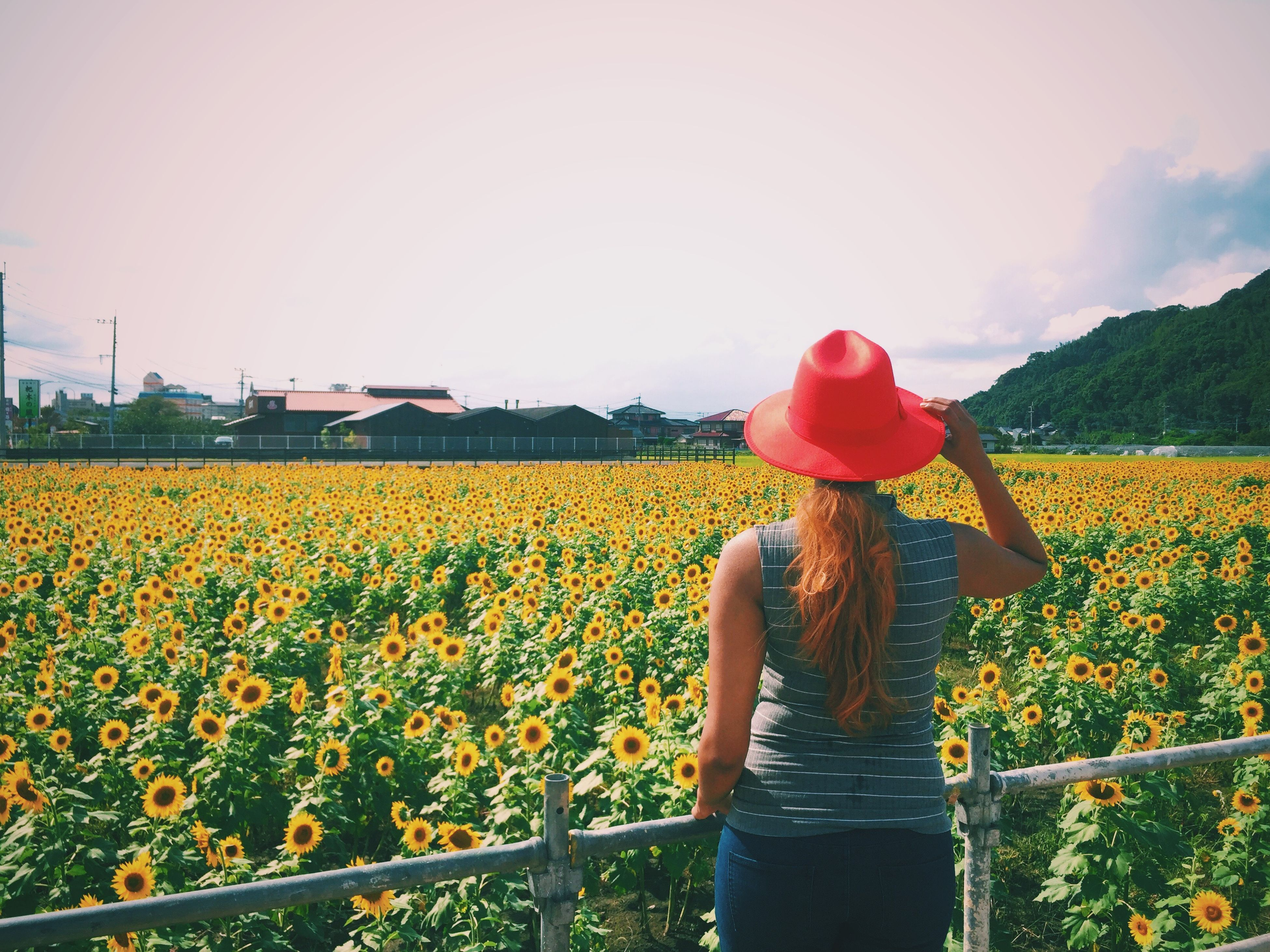 flower, freshness, yellow, beauty in nature, leisure activity, agriculture, lifestyles, standing, field, rear view, nature, rural scene, casual clothing, sky, growth, person, fragility, plant