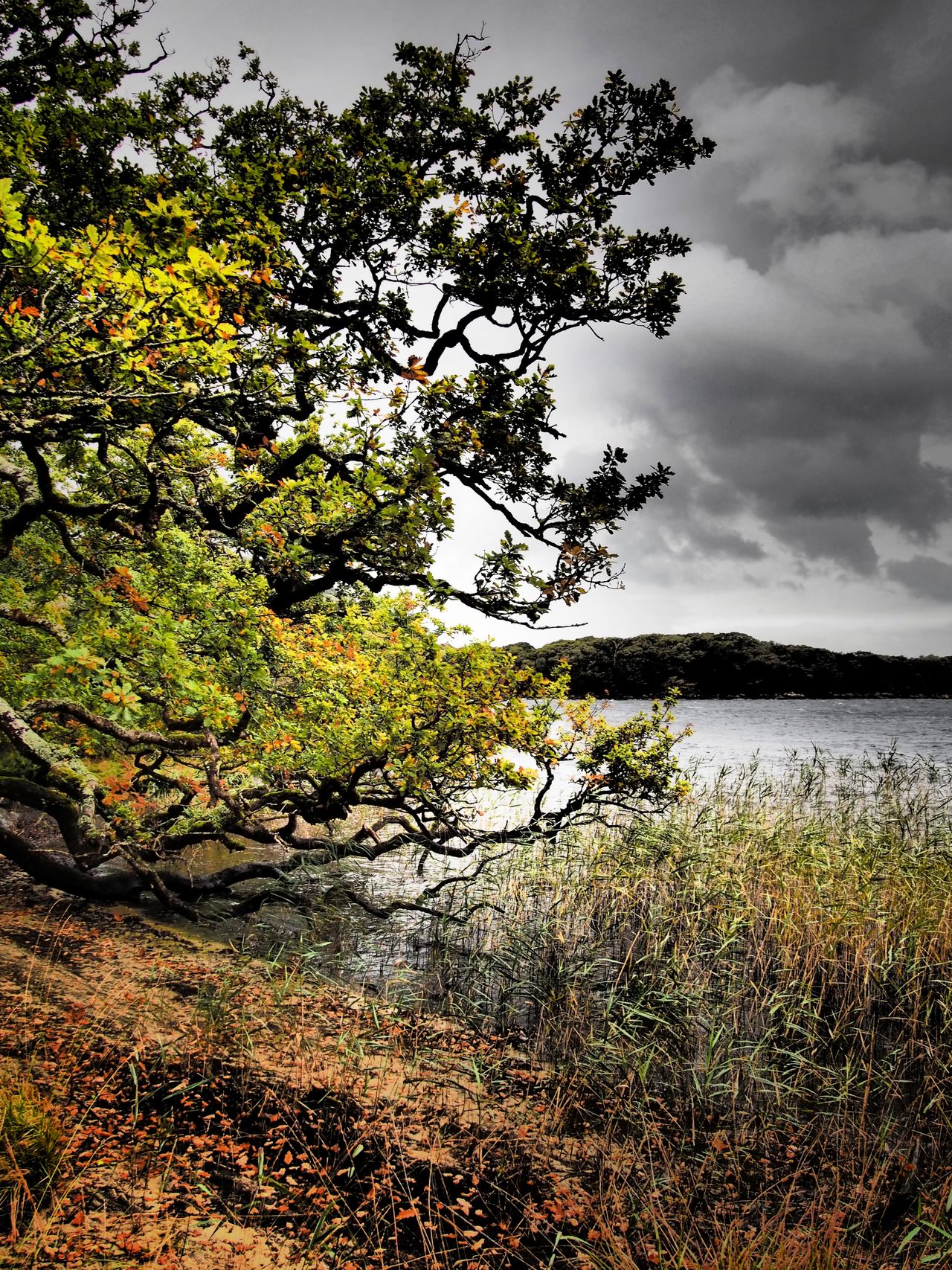 Dinish Island Killarney National Park Ireland Lake View Landscape Landscapes Beauty In Nature Water Nature Scenics Outdoors Autumn Autumn Colours Autumn Colors Muckross Lough Reeds Tranquil Scene EyeEm Nature Lover Overcast Trees Hiking