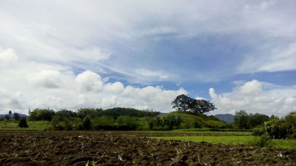 Relaxing Greefield Hills Panoramic Paddy Field Toba INDONESIA