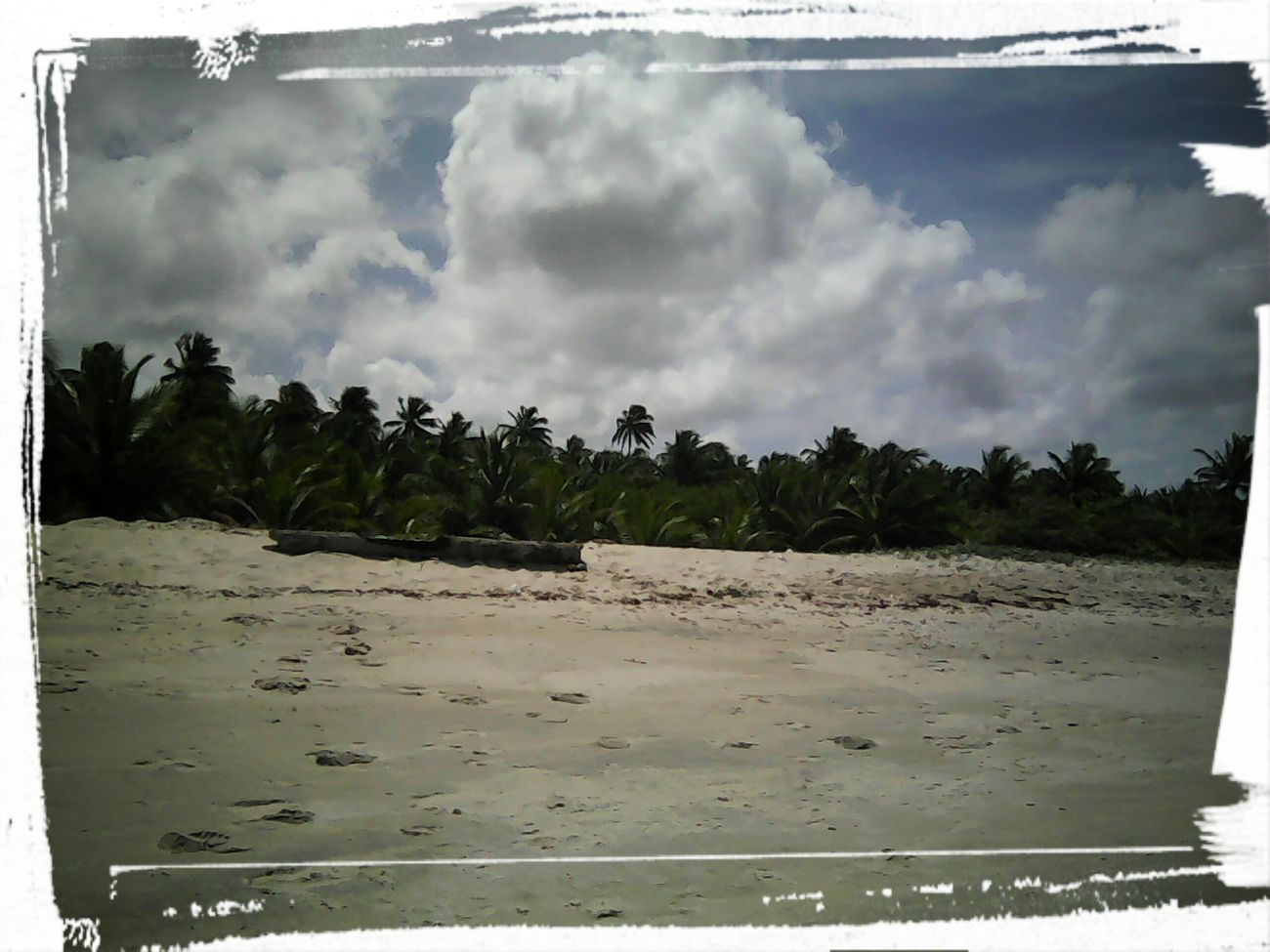 Árvores, vento e paz.☀🌅