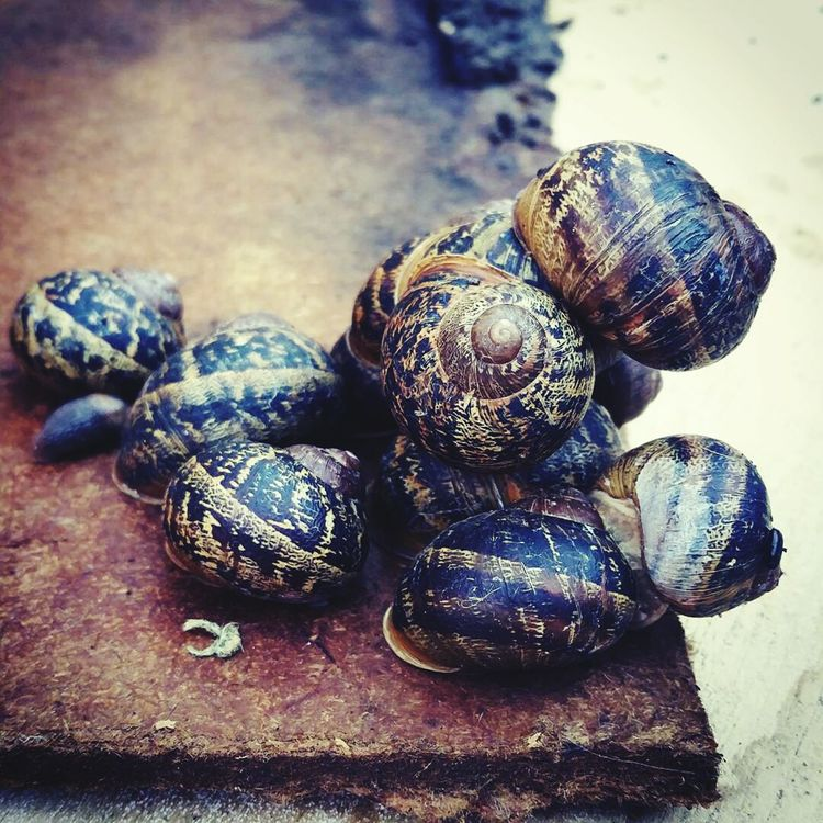 EyeEmNewHere Snails Snails🐌 Snail Shell Close Up Snails In Shells