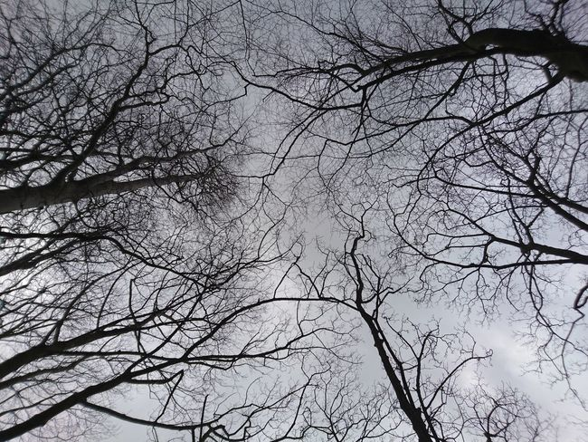 Tree Nature Low Angle View Branch No People Full Frame Sky Day Backgrounds Outdoors Growth Bare Tree Animal Themes Beauty In Nature Close-up Animals In The Wild First Eyeem Photo