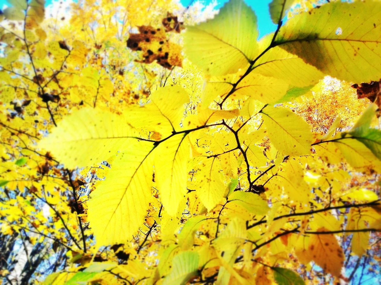 Colors! <3 TreePorn EyeEm Nature Lover Nature_collection Colors