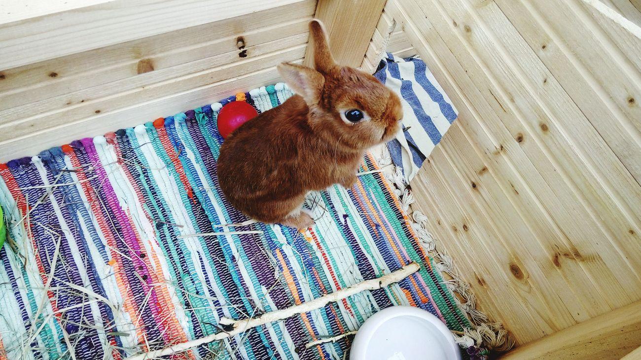 My rabbit Casper! I love him. Bunny 🐰 Rabbit ❤️ Animals