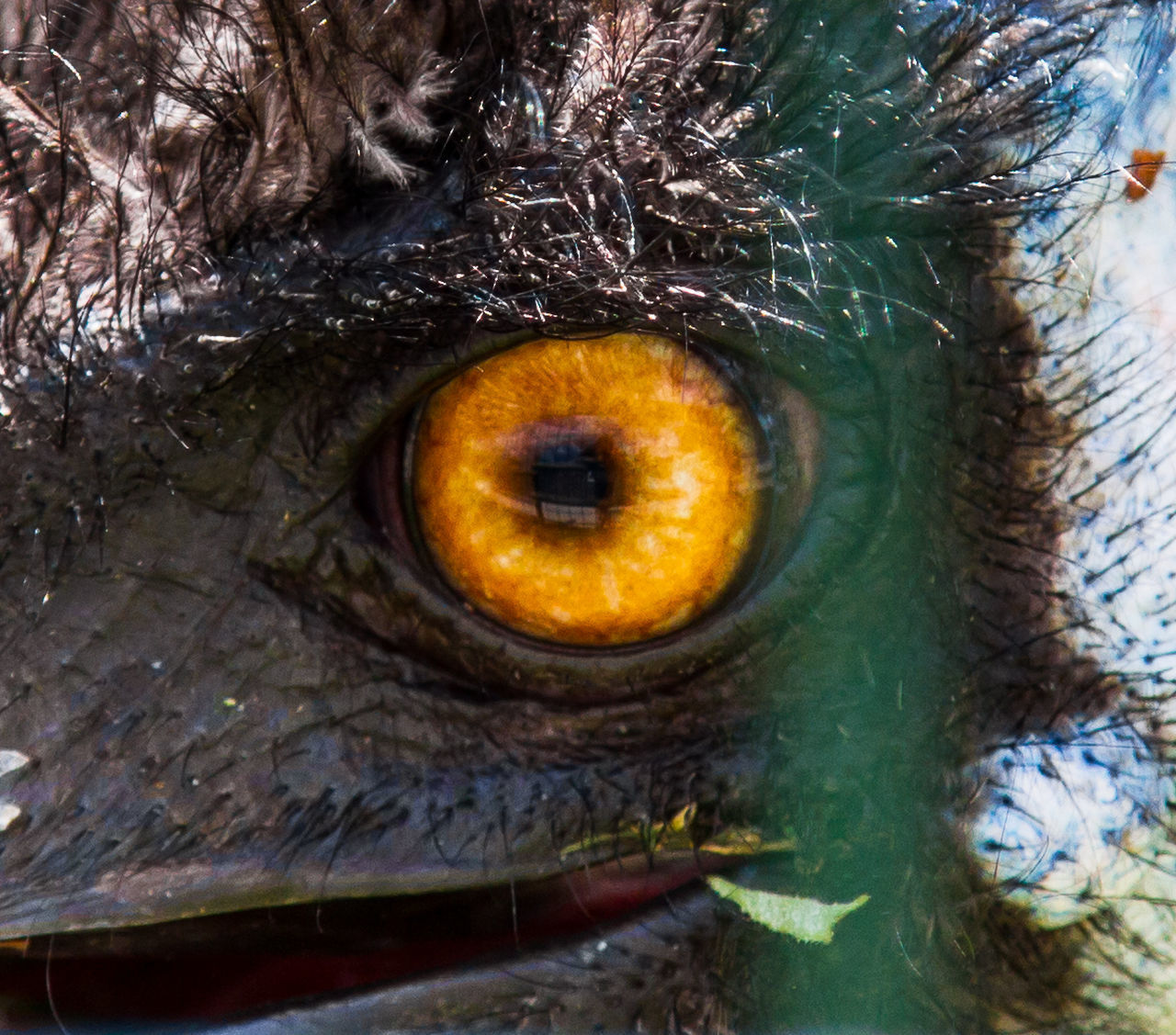 Animal Themes Close-up Day Eyeball Nature No People One Animal Outdoors