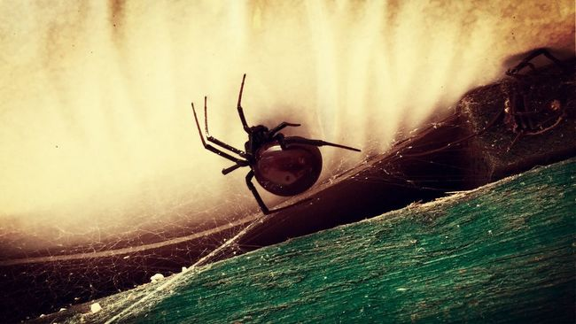 You never know what's patiently waiting for you........ IPhoneography ¡Eyeem Addict! Spider Iphone6plus