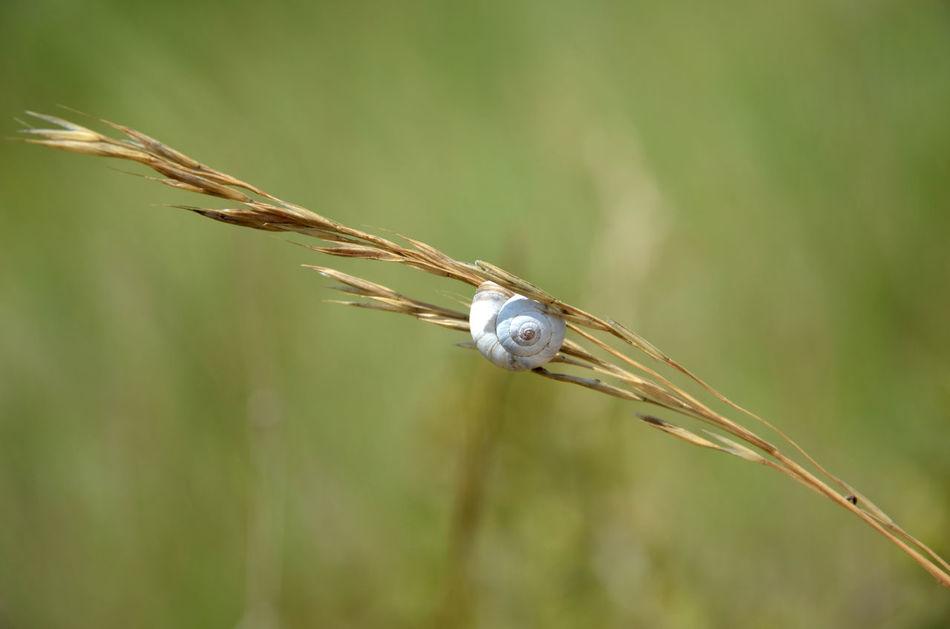 Animales Close-up Day Dettagli Field Fields Grass Insect Lumaca Macro Natura Nature Nature Sneil EyeEmNewHere