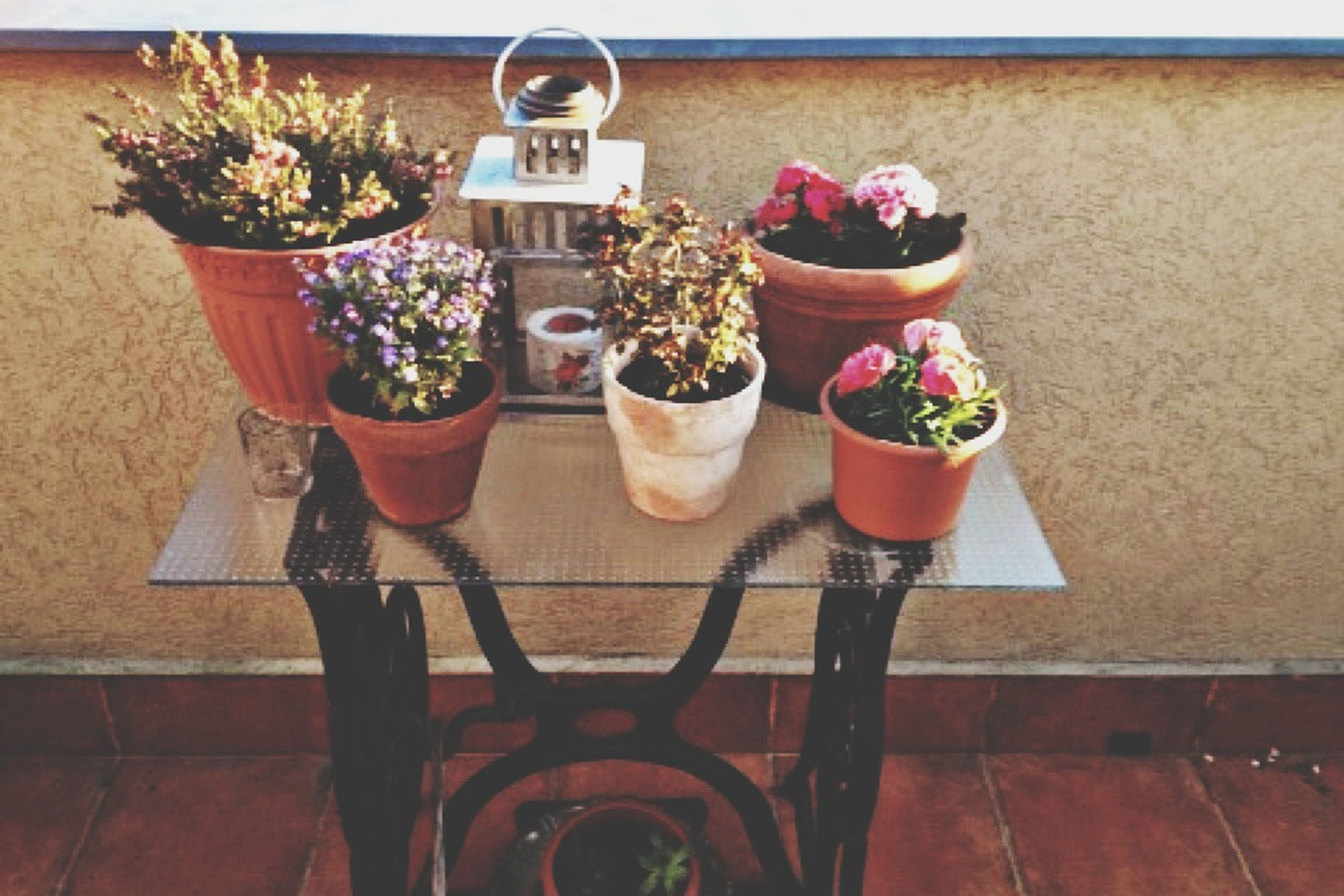 flower, potted plant, freshness, plant, flower pot, variation, table, vase, decoration, growth, high angle view, day, wall - building feature, no people, pink color, sunlight, outdoors, nature, still life, shadow