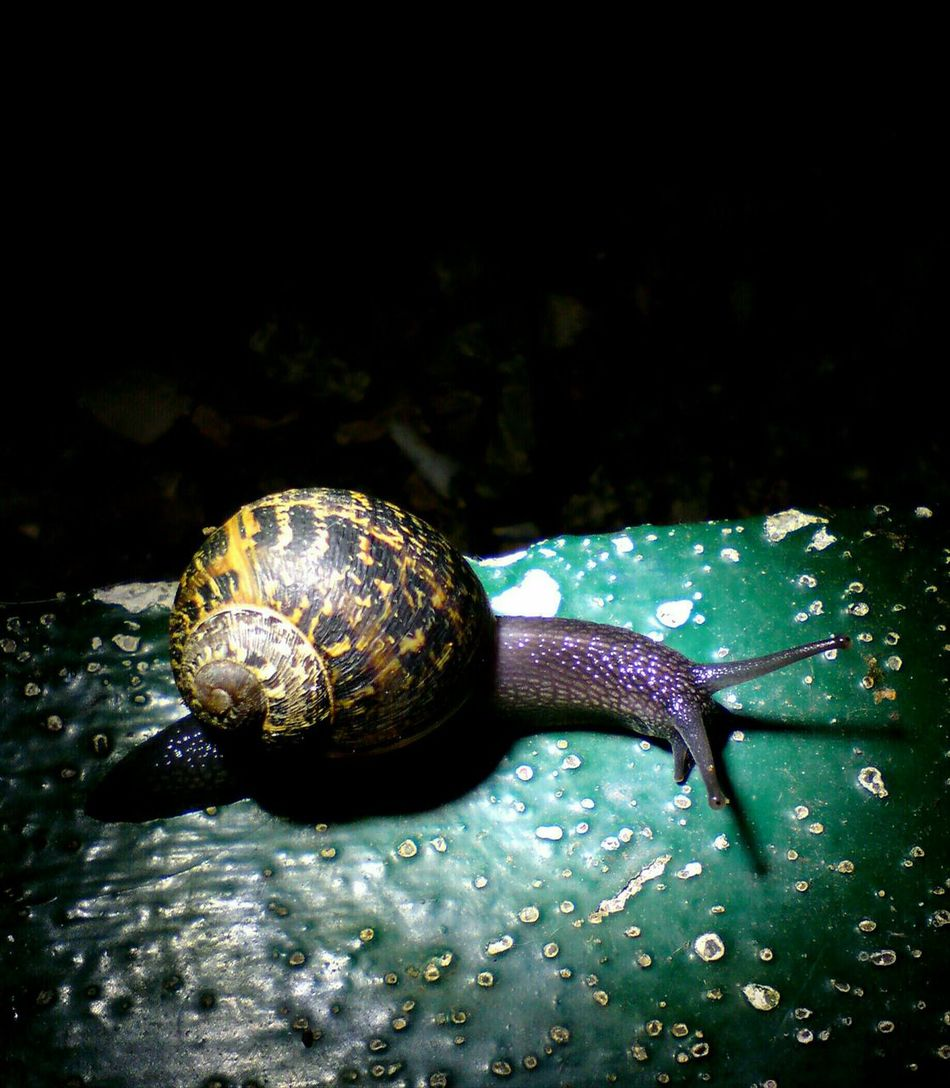 Snail Night Time Photography Snail Shell Close Up Snail Collection Snail Shells Snail Shell Molluscs Close Up Nature Macro Photography Mollusc