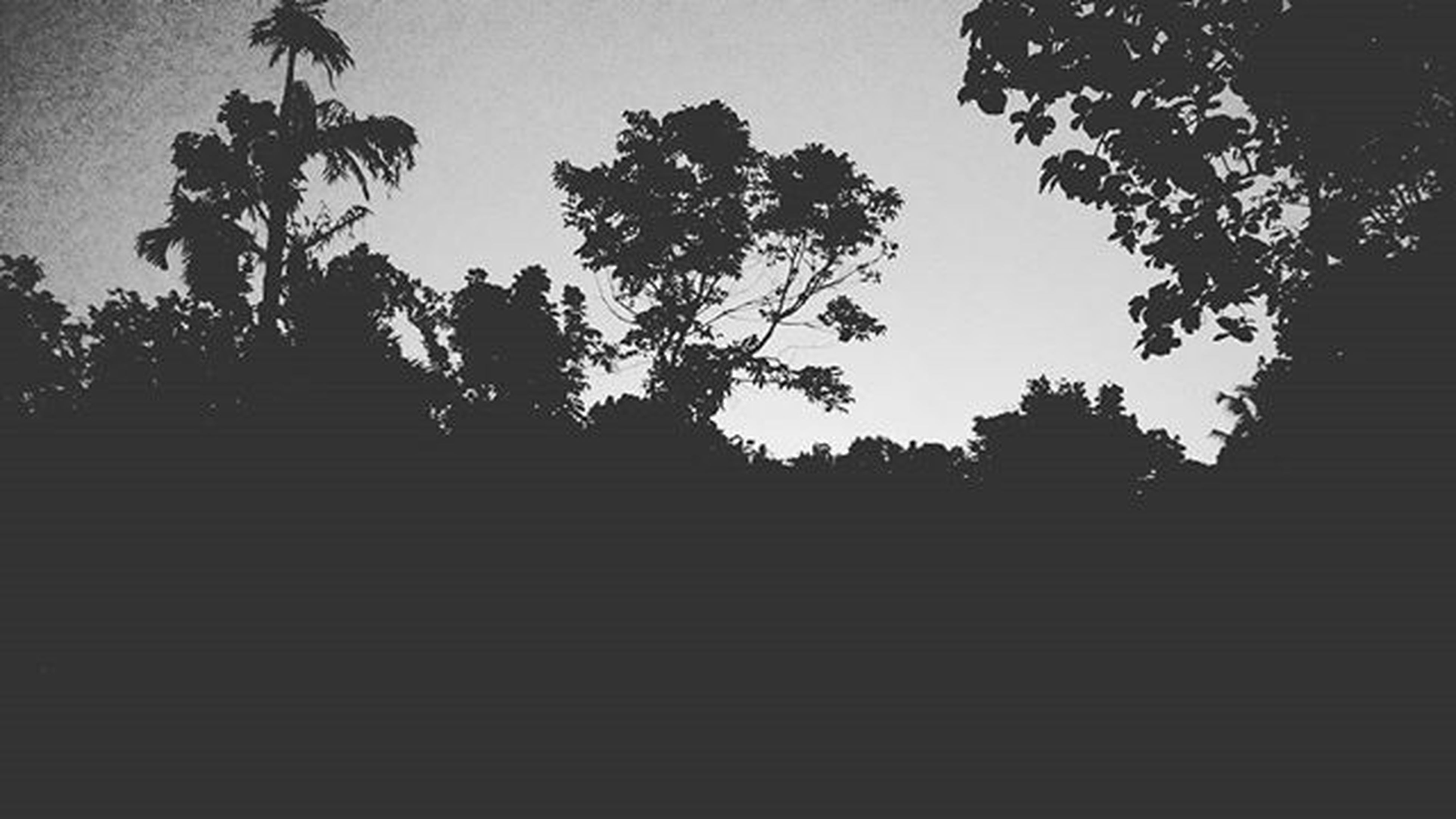 tree, low angle view, built structure, architecture, silhouette, building exterior, sky, clear sky, steps, outdoors, branch, no people, growth, dusk, nature, sunlight, day, sunset, building, copy space