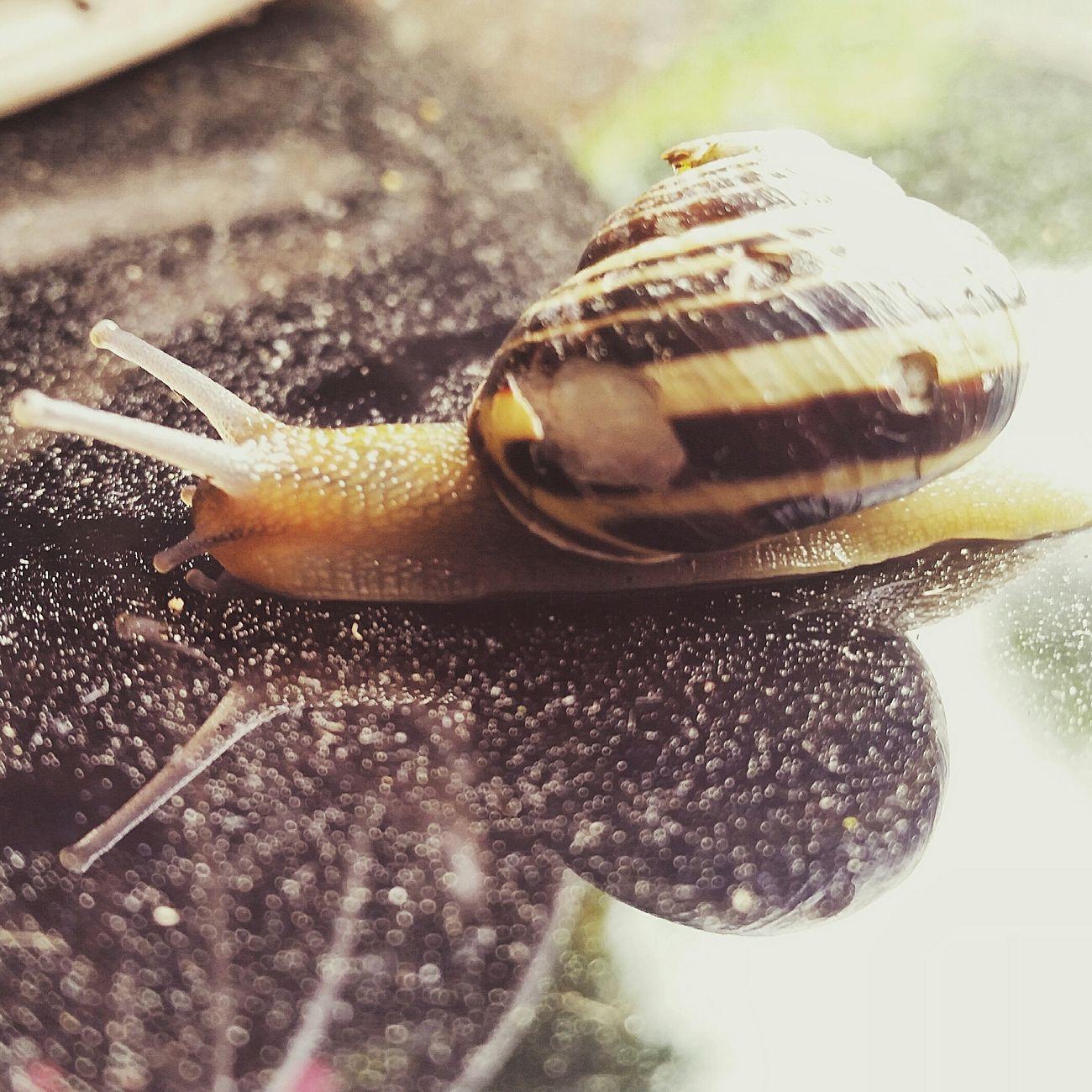 Photo Naturephotography Macro Photography Snail Slak
