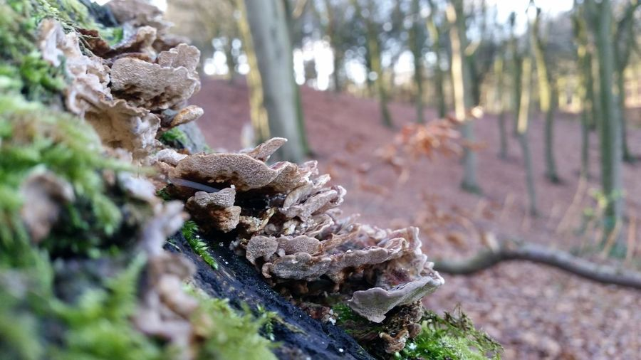 Moss Covered Tree Tree Forest WoodLand New Growth Fallen Tree Fungus Fungi Moss & Fungi