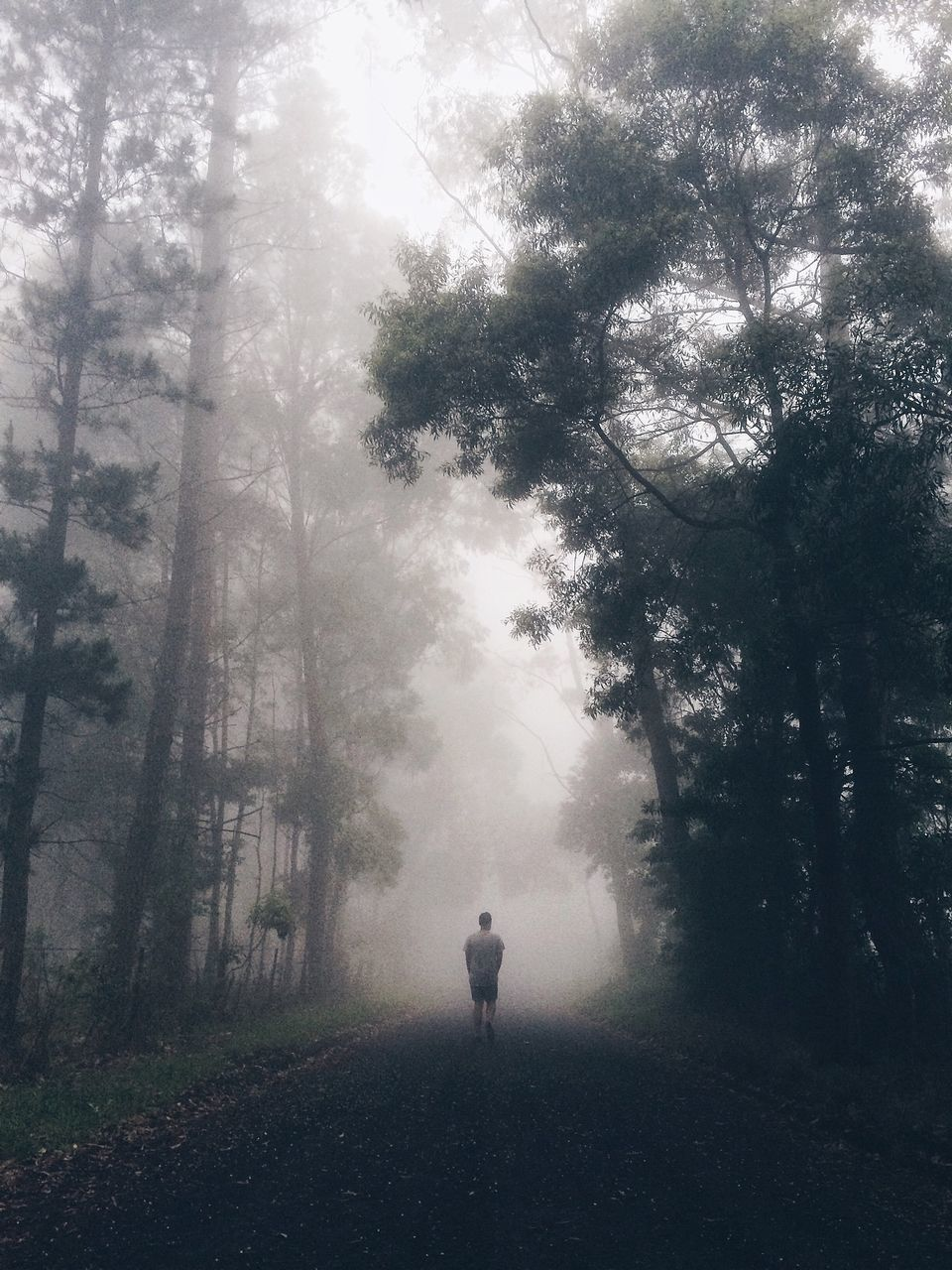 Rear View Of Man Walking On Country Road Amidst Trees In Foggy Weather
