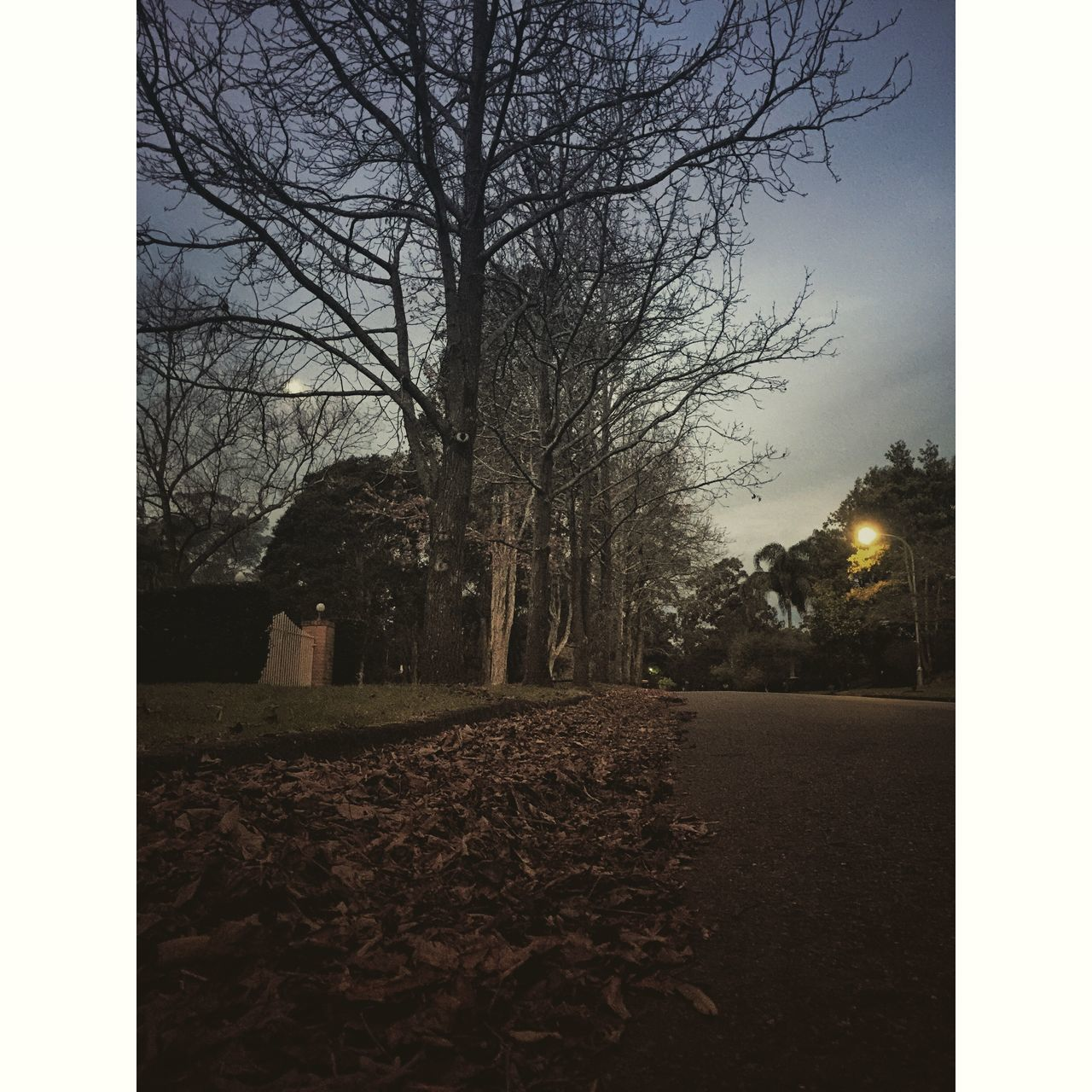 Winter night-run🍃🍂🍁💪🏻 Beautiful Nature Work Out Time Happy With This View Instamoment EyeEm Nature Lover Enjoying Life Instaskylovers Landscape Winter Trees Sydney Iphoneography