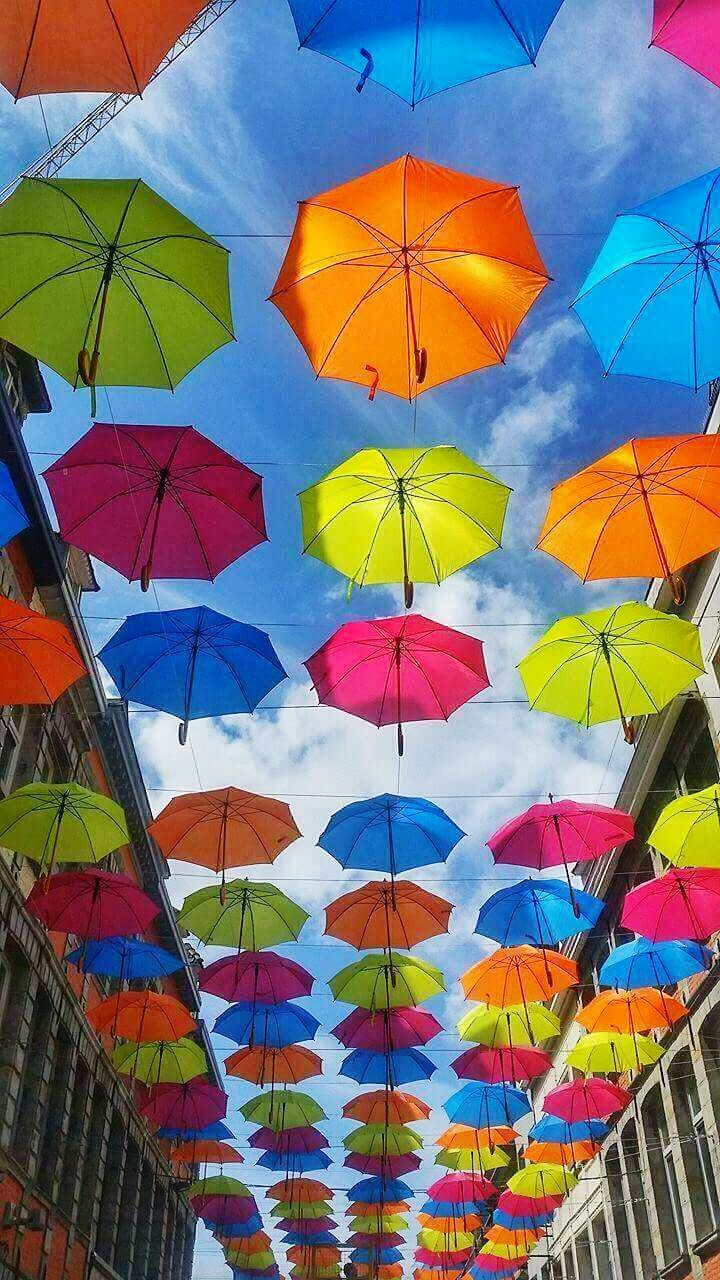multi colored, low angle view, protection, variation, day, choice, no people, outdoors