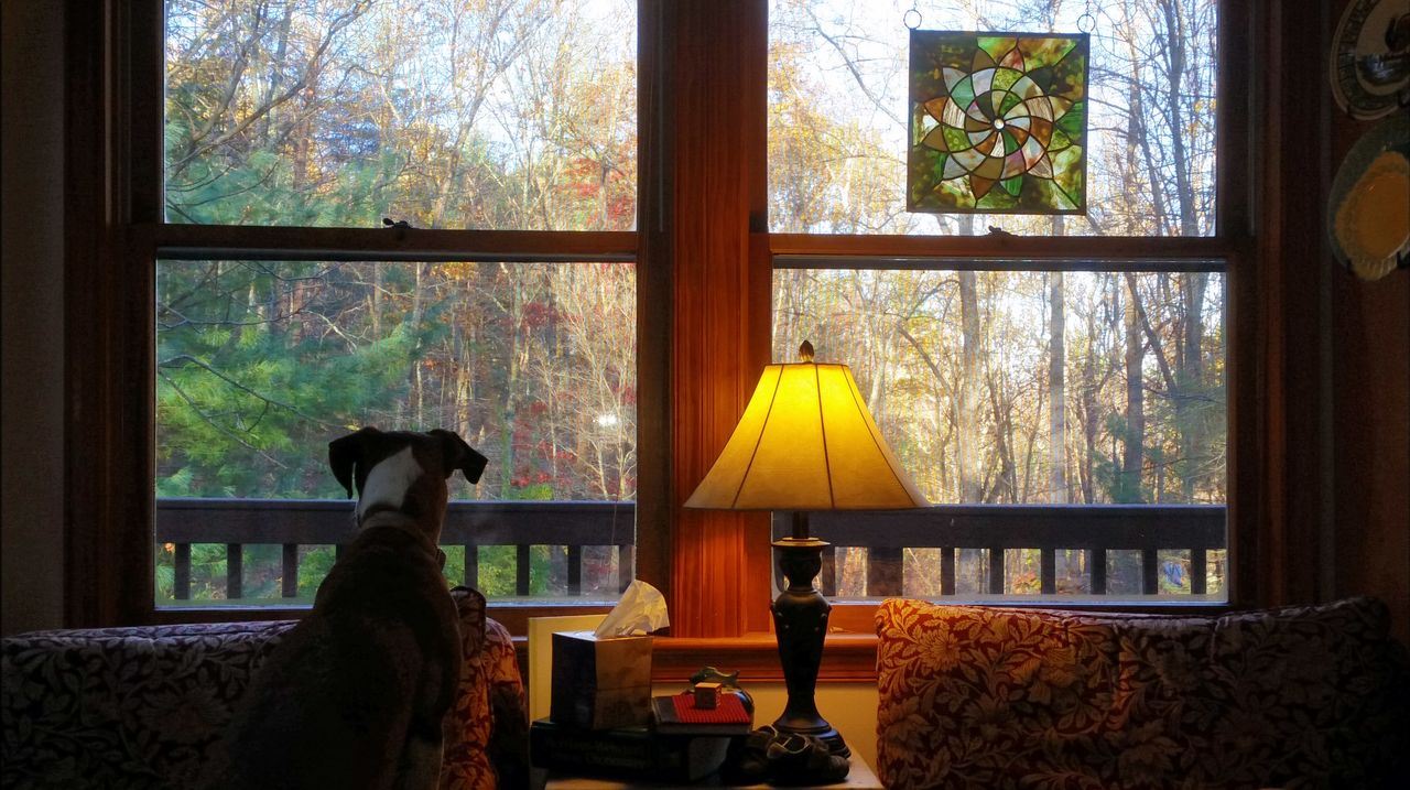 Window Looking Through Window Dogslife Keeping Watch Dog Love Dog Window View