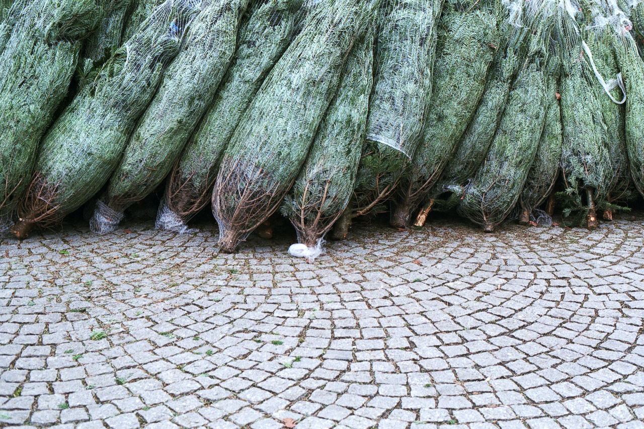 Beautiful stock photos of weihnachtsbaum, Abundance, Christmas Tree, Cobblestone, Day