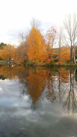Good Morning Golden Hour Unfiltered Unaltered Unmotified True Colors Fall Colors End Of Peak On The Pond Water Reflections Placid  Natures Beauty Maple Tree Falling Leaves Green Mountain State