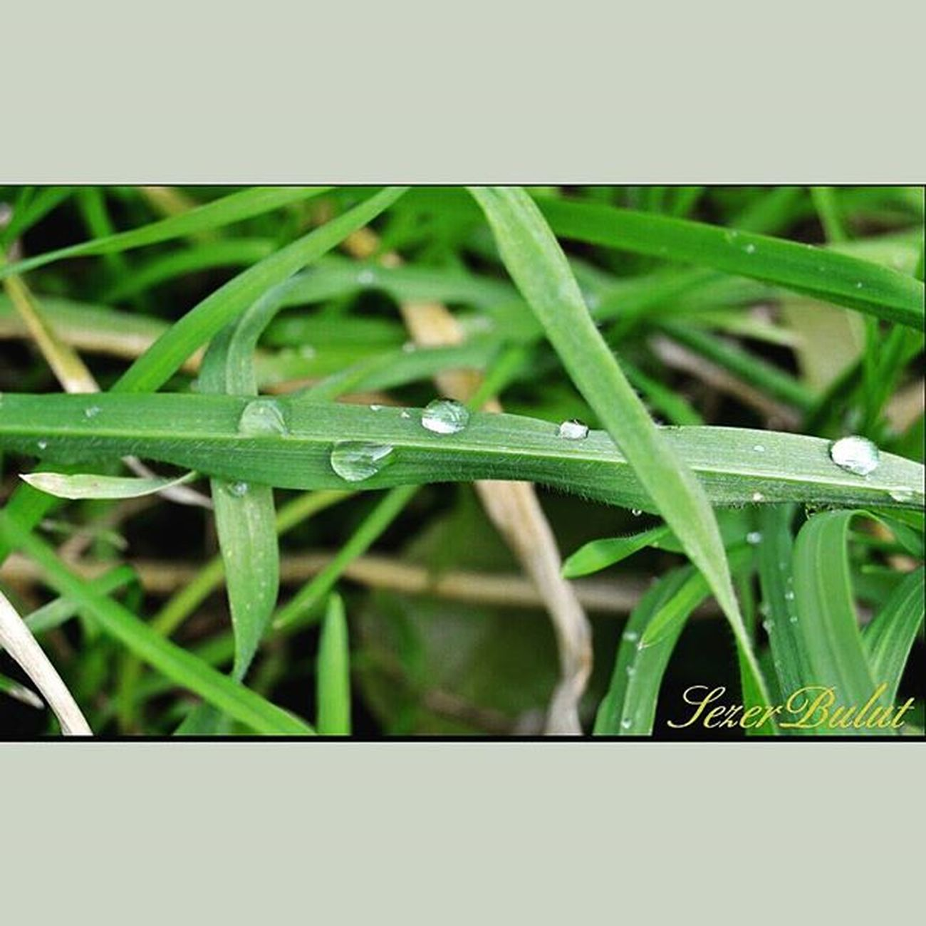 Drops Yagmurdansonra Raindrops Nature Nikon EyeEm Best Shots