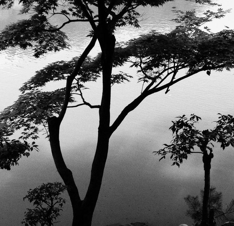 Japon Japan Estampe Noiretblanc Paysage Arbres végétation Nature Gilgiuglio AgilPhoto phototourisme