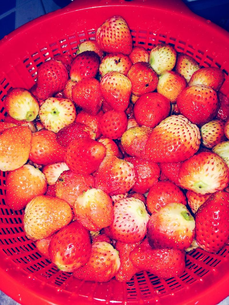 ❤️❤️❤️❤️❤️ 🍓🍓🍓🍓🍓🍓 Fruitporn Strawberries Red 😻 Yummy♡