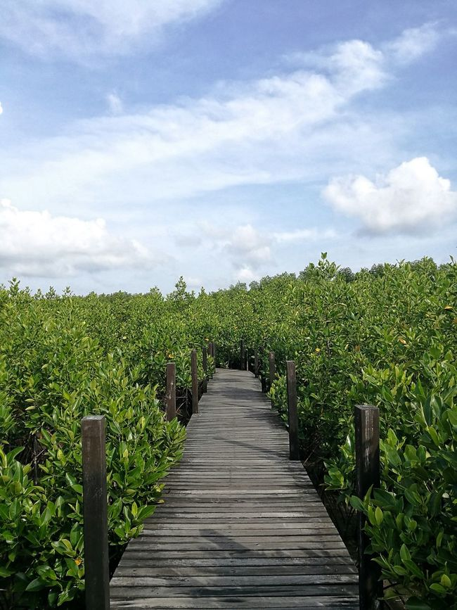Mangrove forest Enjoying Life Relaxing Forest Path