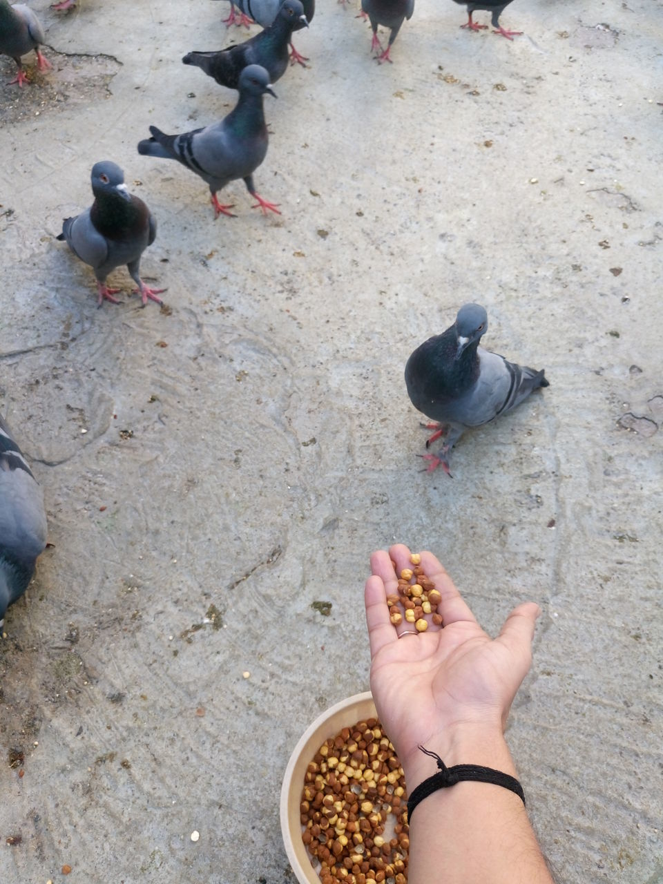 bird, animal themes, high angle view, real people, human body part, human hand, animals in the wild, personal perspective, animal wildlife, large group of animals, day, outdoors, one person, lifestyles, food, perching, people