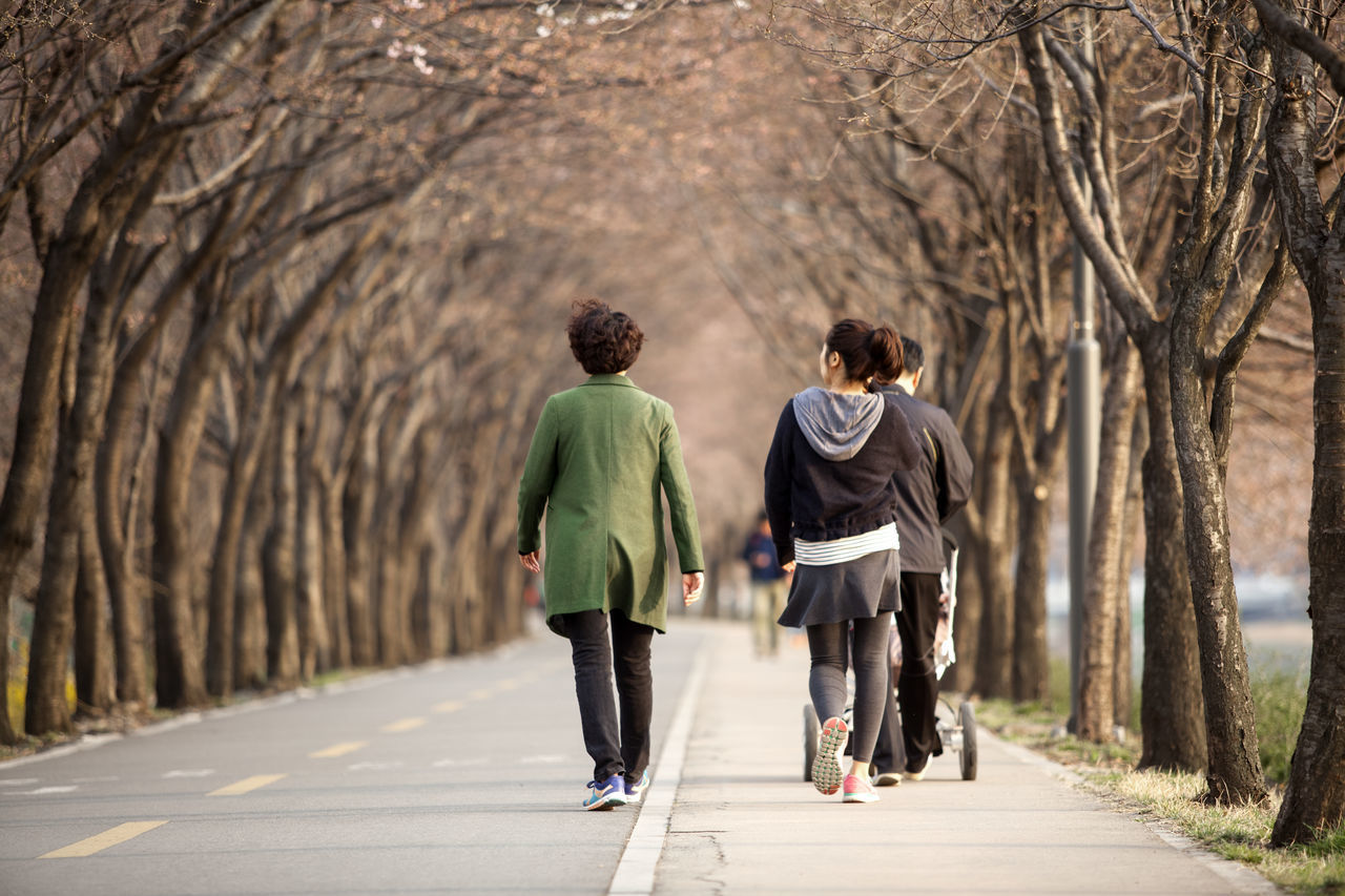 Beautiful stock photos of seoul, Bare Tree, Branch, Casual Clothing, Day