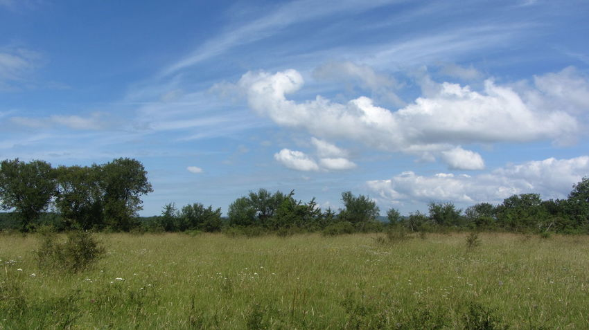 France GR65 Via Podiensis Beauty In Nature Blue Sky Cloud - Sky Day Field Grass Growth Landscape Nature No People Outdoors Plant Scenics Sky Tranquil Scene Tranquility Tree