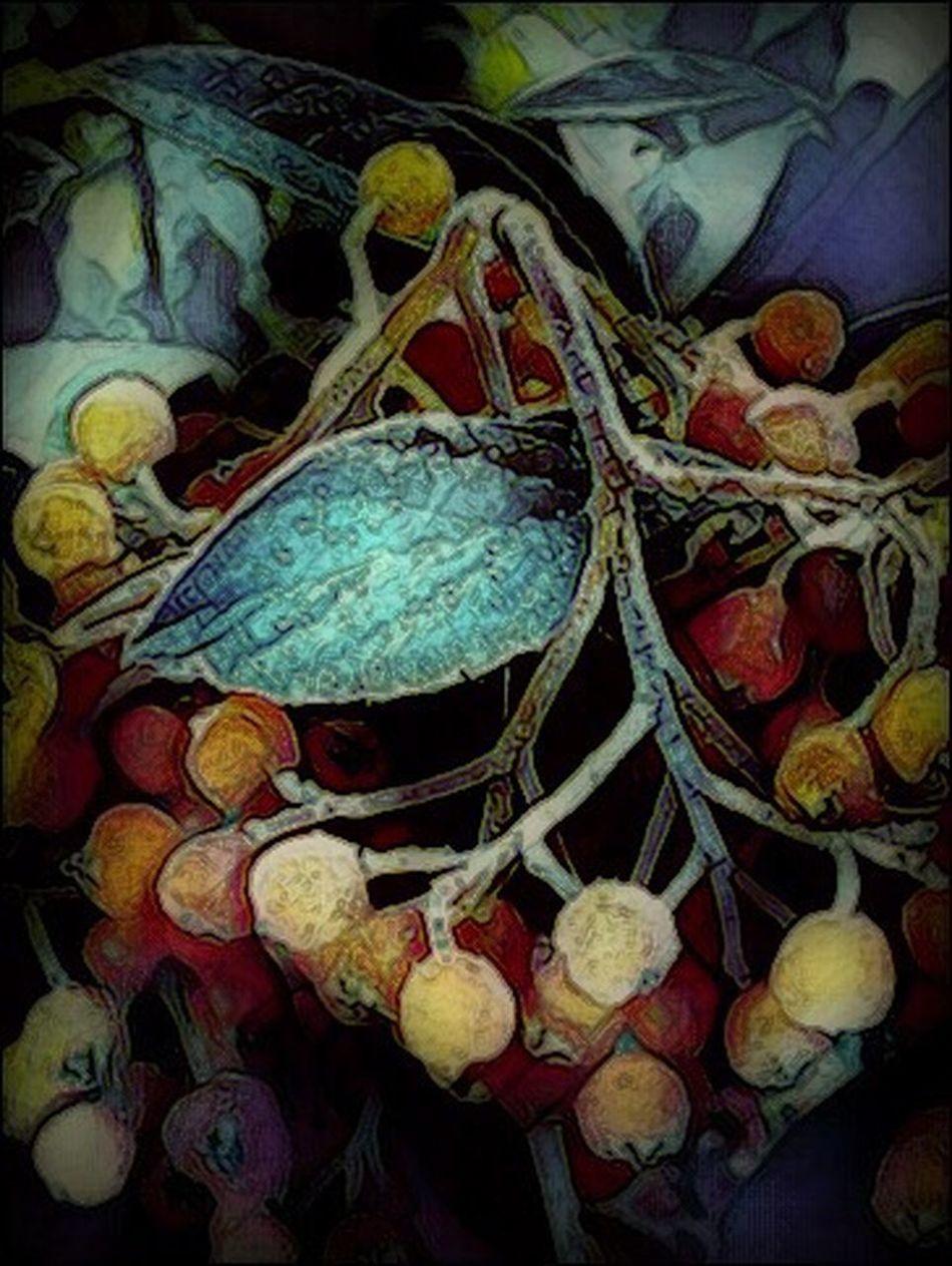 Photography Close-up Berries On A Branch My Edit Eyeem Edit Picsart Edit