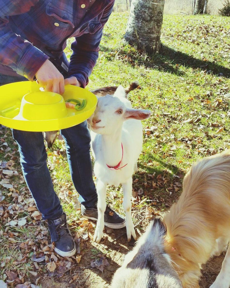 Pets Pet Photography  Enjoying Life Petstagram Capture The Moment Milo & Me Goats Baby Goat