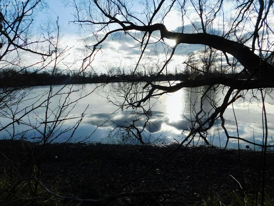 Tree Reflection Water Lake Beauty In Nature Outdoors Silhouette Tranquility Cloud - Sky Scenics Nature Sky EyeEm EyeEm Nature Lover Winter Winterseasons Eyeem Photography Eyeem Market Eyeemphotography Frozen Landscape Naturelover Naturephotography Bare Tree No People