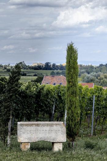Jesuitengarten Cloud - Sky Forst Green Color Growth Hill Idyllic Jesuitengarten Landscape Name Pfälzerwald Rural Scene Scenics Sky Stone Tranquil Scene Tranquility Tree Vineyard Vineyard Location Vineyard Site
