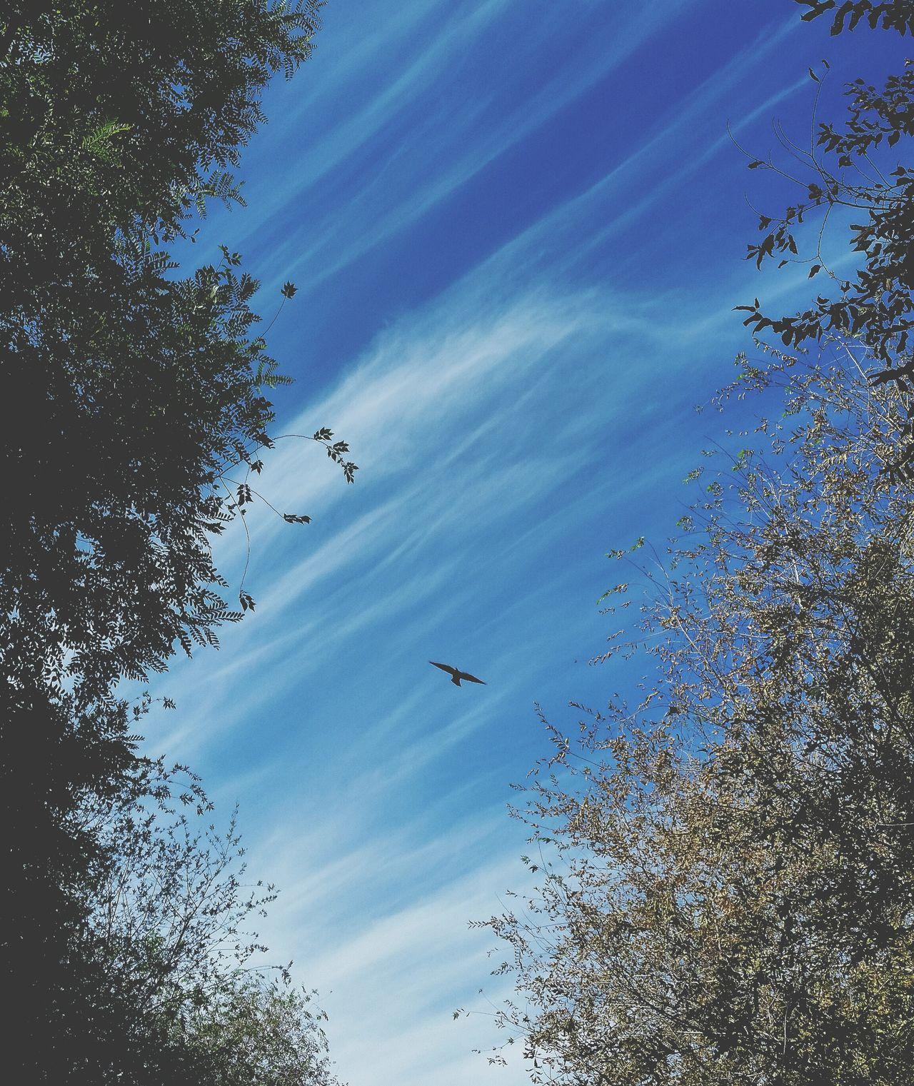 небо⛅️ птица
