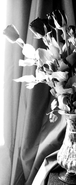 Beauty In Nature EyeEmNewHere Rose - Flower Black And White Petal No People Flower Half A Vase Unique Perspectives