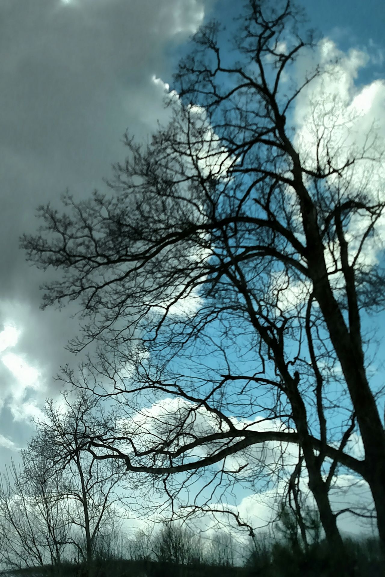 The Purist (no Edit, No Filter) Blue Sky Cloudy My Cloud Obsession☁️ Tree Silhouette I Love Bare Trees Todays Weather Report -20 wind chill From My Point Of View From My Lens Beautiful Nature My Perspective Bare Branches Beautiful Sky My Eye To The Sky Sky And Tree Gods Beauty