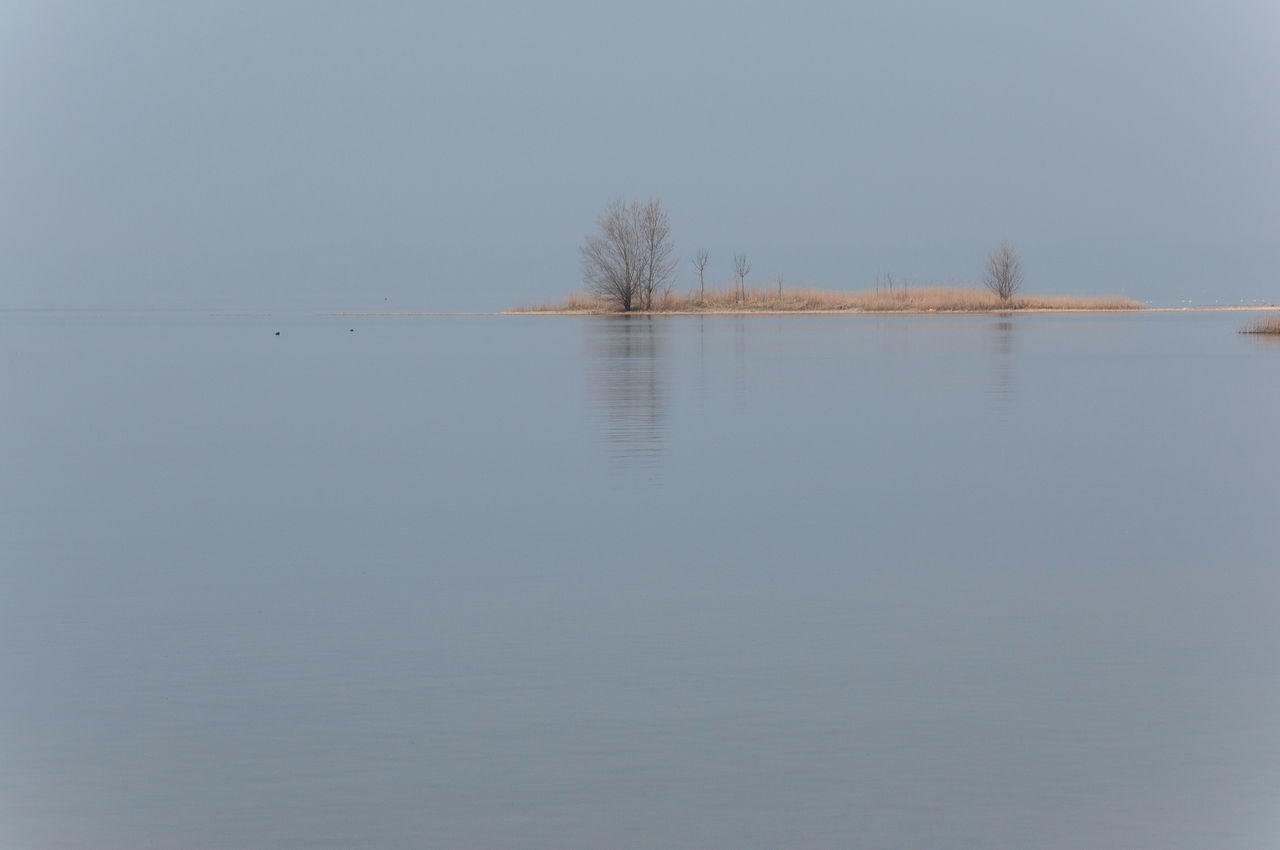 chiemsee halbinsel 1 Animals In The Wild Bare Tree Beauty In Nature Branch Day Grass Island Lake Landscape Lone Nature No People Outdoors Reflection Scenics Silence Of Nature Sky Tranquil Scene Tranquility Tree Water Wideness