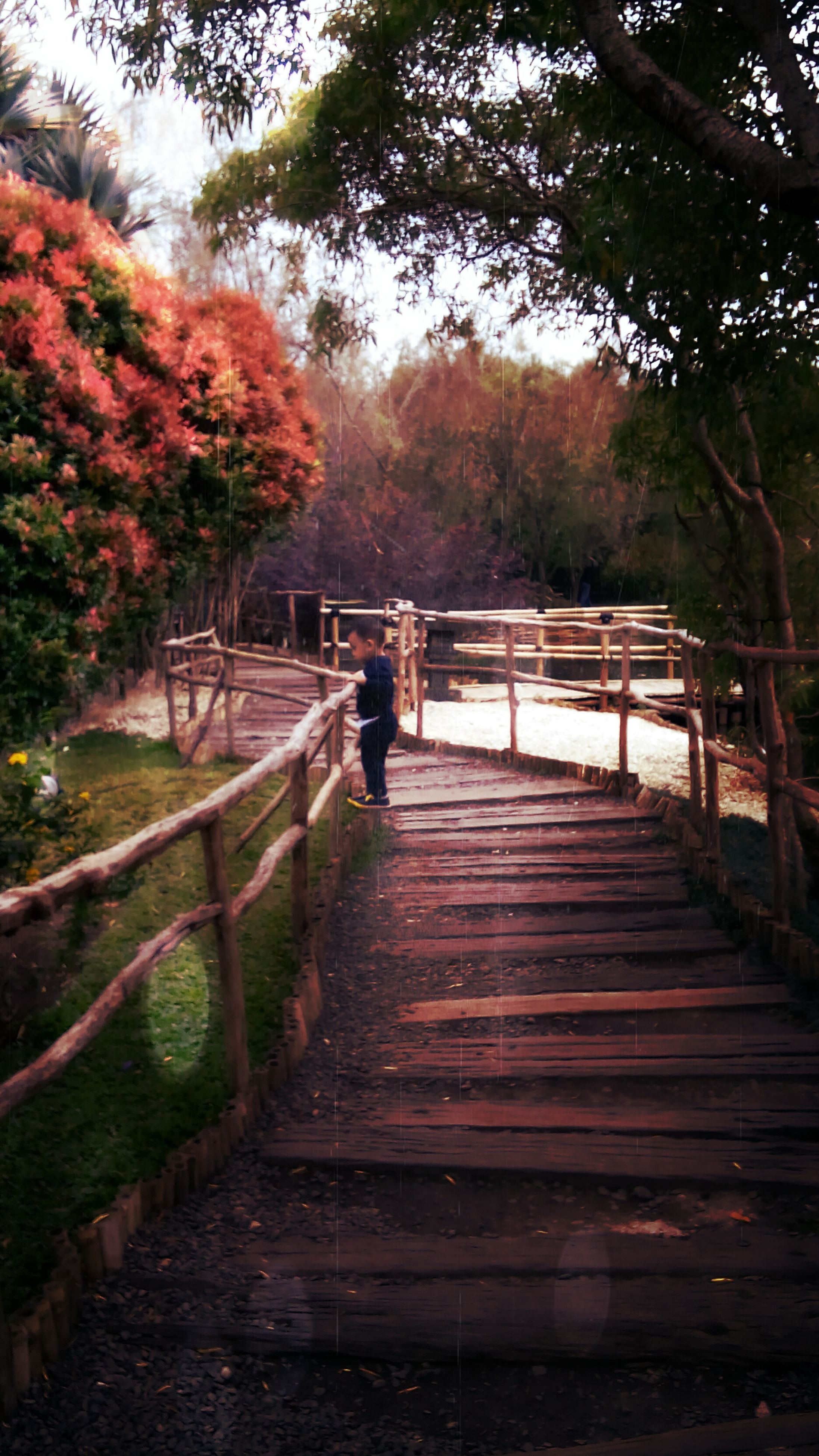 tree, nature, beauty in nature, railing, steps, outdoors, the way forward, tranquility, staircase, scenics, day, footbridge, no people, steps and staircases, sky, cultures