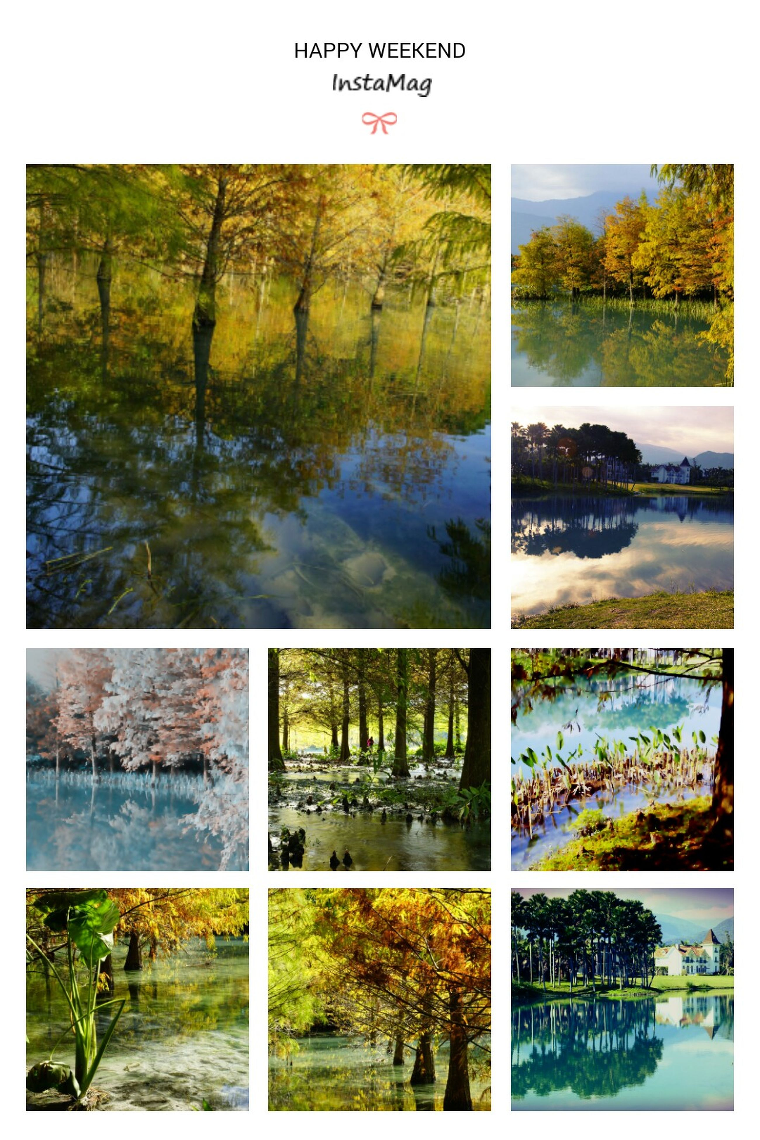 transfer print, water, auto post production filter, tree, reflection, lake, nature, tranquility, river, scenics, tranquil scene, beauty in nature, plant, growth, pond, day, waterfront, green color, outdoors, no people